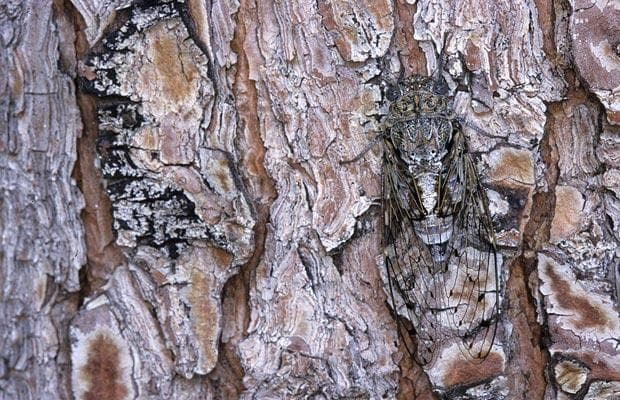 animals disappear using camouflage