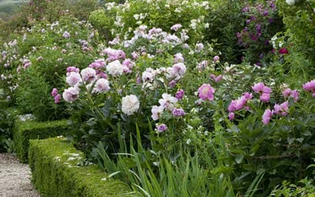 peonies with wow factor - eight