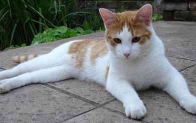Image result for cat as a  pet