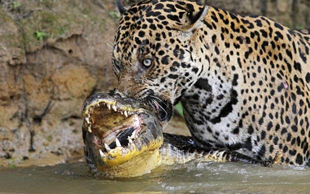 Animals Tropical Rainforest Uncommon