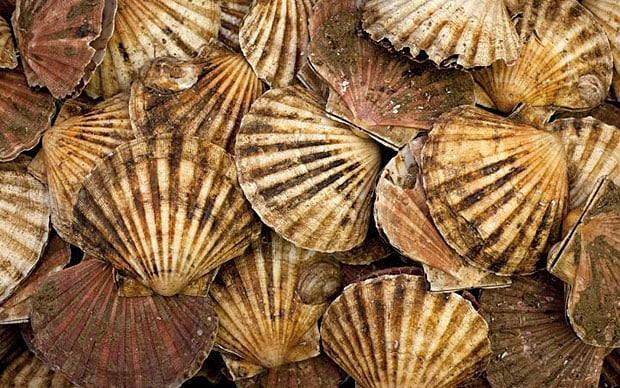 What would you do with 100 scallop shells  Telegraph