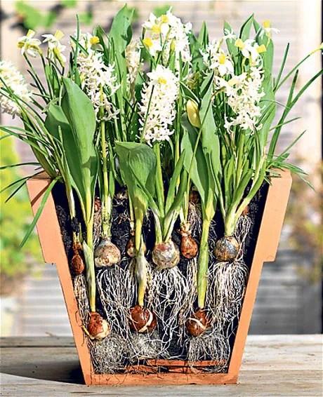 soil layers diagram 2004 kia sorento parts telegraph gardenshop: buy spring bulbs -