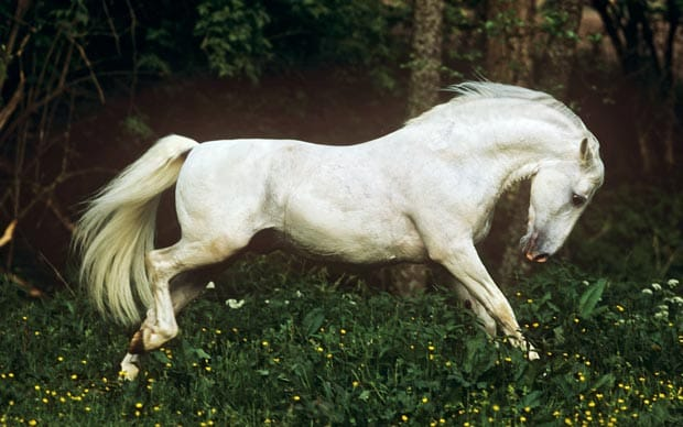 Horse Riding Wallpaper Hd Brother Mendel S Perfect Horse By Frank Westerman Review