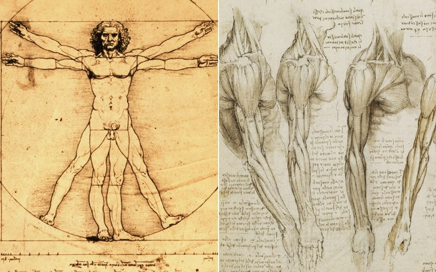 Anatomy Da Leonardo Artwork Vinci Pictures