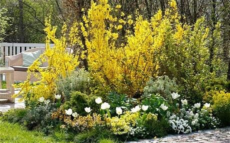 yellow flowers bring sunshine