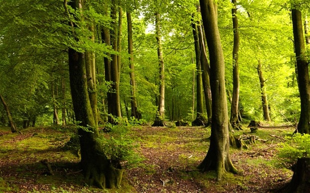 ancient woodland could be
