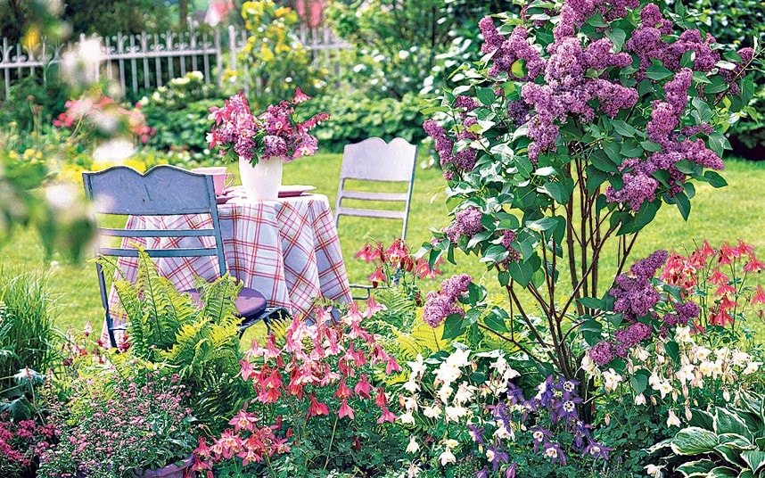 Growing lilac make way for heavenly scents  Telegraph