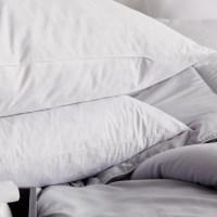 Blue Ridge Home Fashion Feathers European Pillow & Reviews ...