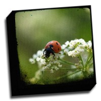 Picture it on Canvas 'Ladybug' Wall Art on Canvas | Wayfair