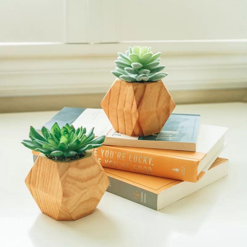 2 Piece Succulent Plant Set in Pot