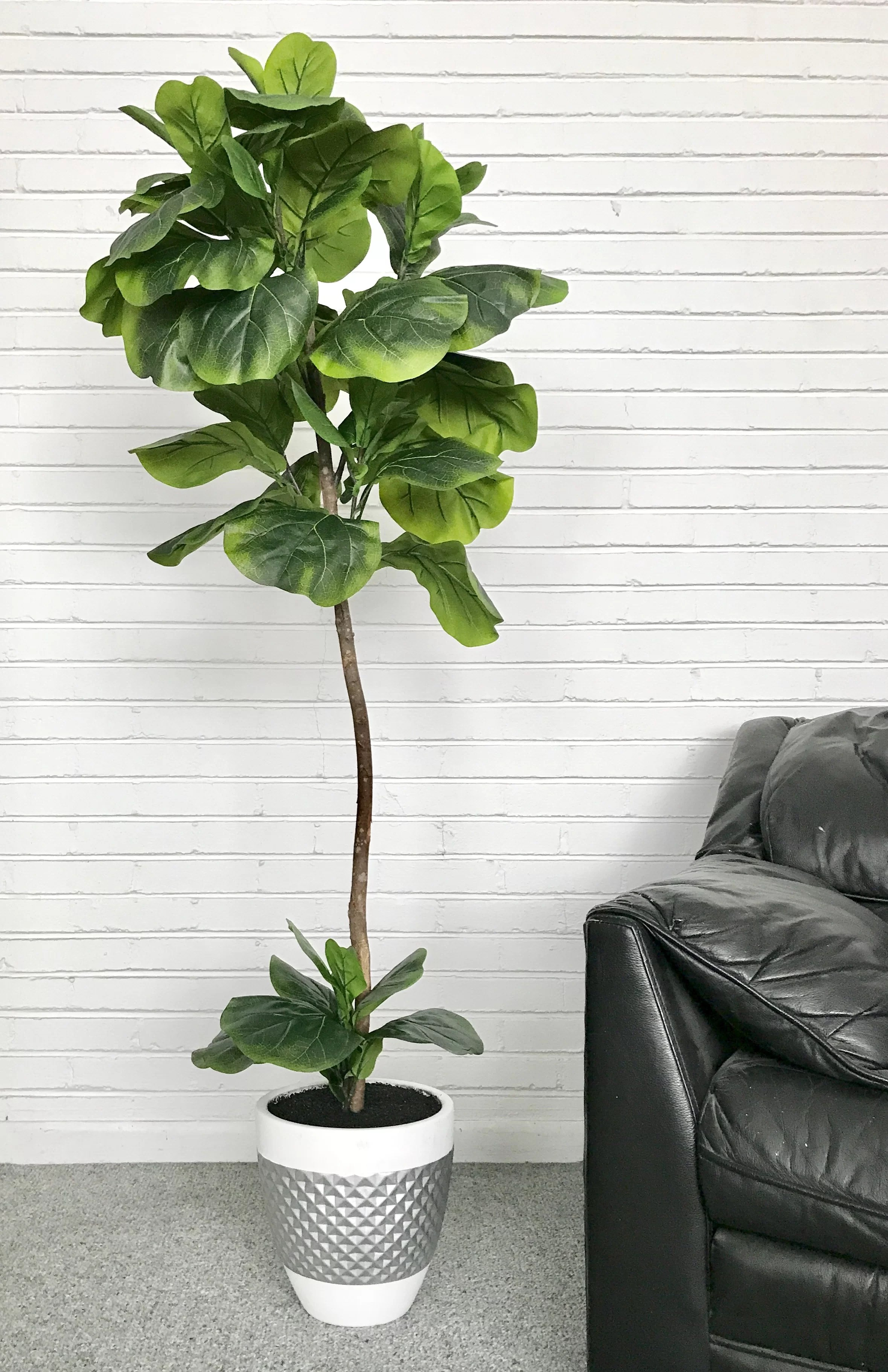 sofas and sectionals com reviews where to buy sofa pillows latitude run fiddle-leaf fig floor palm tree in pot ...