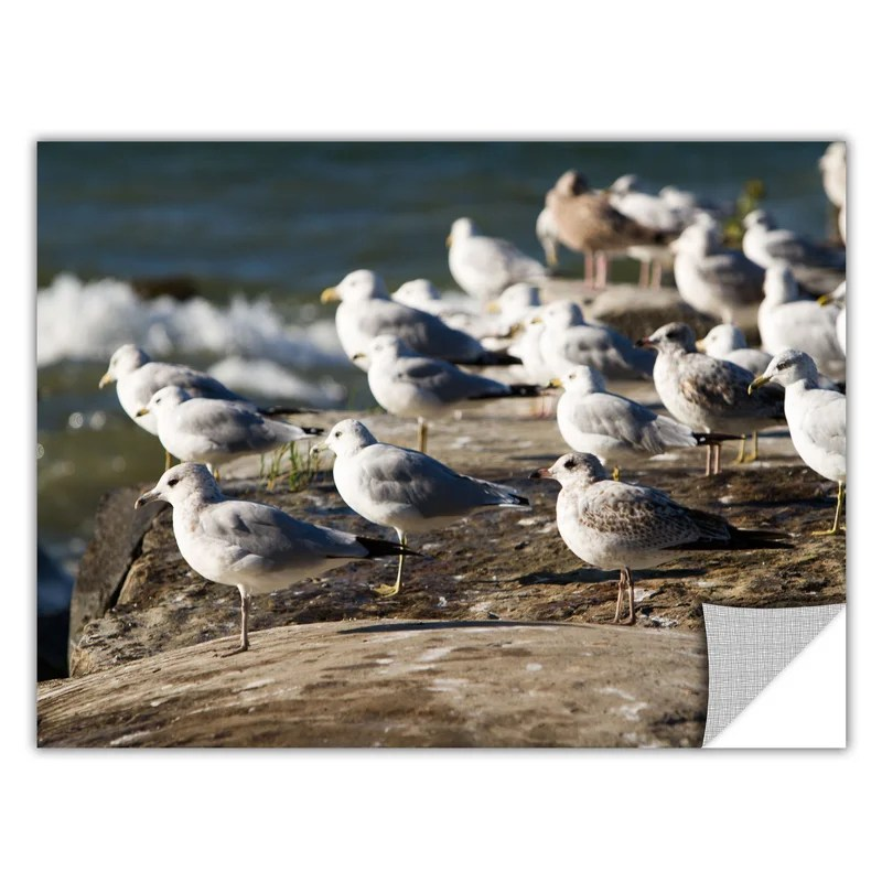 Pigeons by Cody York Photographic Print  Removable Wall Decal Size: 24 H x 36 W x 0.1 D