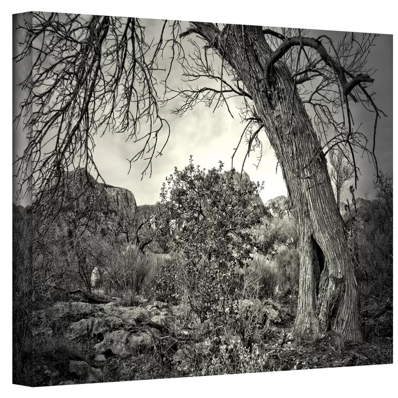 Listen to Whispers by Mark Ross Photographic Print on Canvas Size: 24 H x 32 W