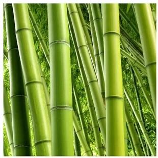 bamboo all wallpaper wayfair