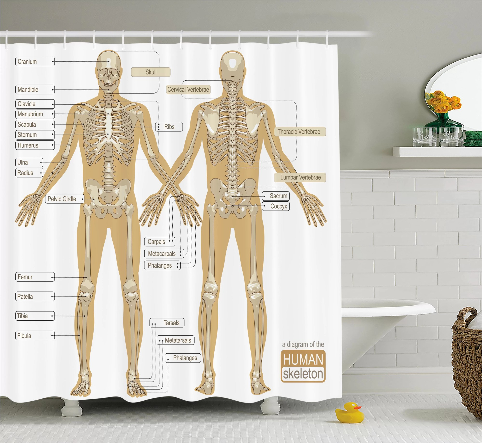 hight resolution of ambesonne human anatomy diagram of human skeleton system with titled main parts of body joints picture single shower curtain wayfair ca
