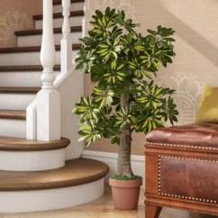 Artificial Trees For Living Room Kajaria Wall Tiles Design You Ll Love Wayfair Schefflera Tree With Pot
