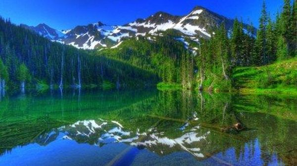 Olympic National Park the Forests the Mountains and the