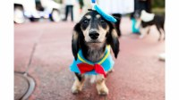 Disney Dog Halloween Costume Ideas Perfect for Your Pet ...