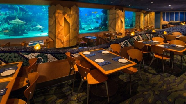 Rows of tables at Coral Reef Restaurant alongside a bank of aquarium windows