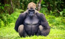 Lesio-Louna Wildlife Reserve, Congo