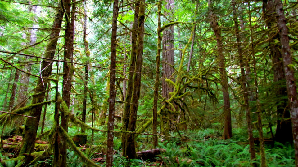 The impact of wood use on north american forests. Regeneration Archives Earth Wise