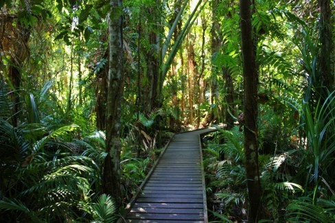 A Rainforest Boardwalk Path in the Cairns Botanical Garden in Cairns, Australia