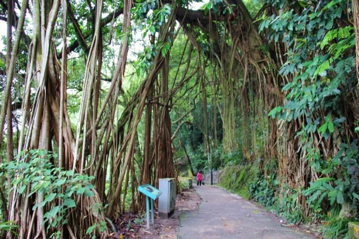 Nature trail on Peak Circle Walk at The Peak in Hong Kong