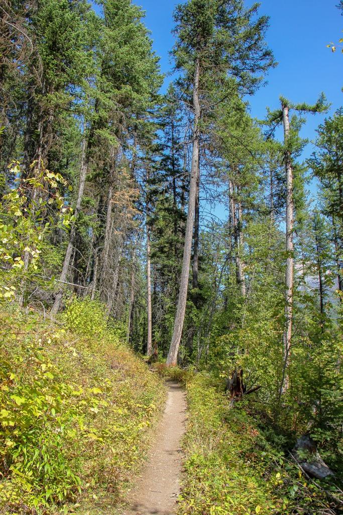 View of the Bowman Lake Trail, Glacier National Park, Montana