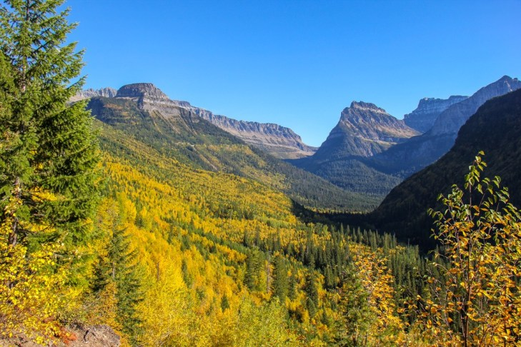 Fall Colors along the Going to the sun, Glacier National Park, Montana