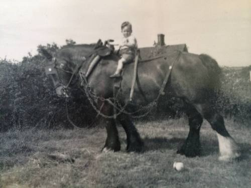 Uncle Bert on Blossom, Grandfathers cart horse