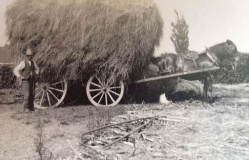 Great Grandfather stood in front of a Cart Horse and Hay wagon