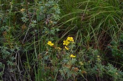 Lots of wildflowers here.