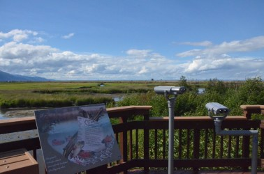 Binoculars at two heights. In the distance you can see the railing of another boardwalk that follows the highway side of the marsh.