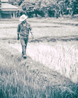 Professional Photographer Scott Lumley Takes a Field Trip to Rice Farming with We Learn Thai Chiang Mai 386