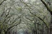 Oak Avenue, Wormsloe Plantation; Isle of Hope, GA; 2009