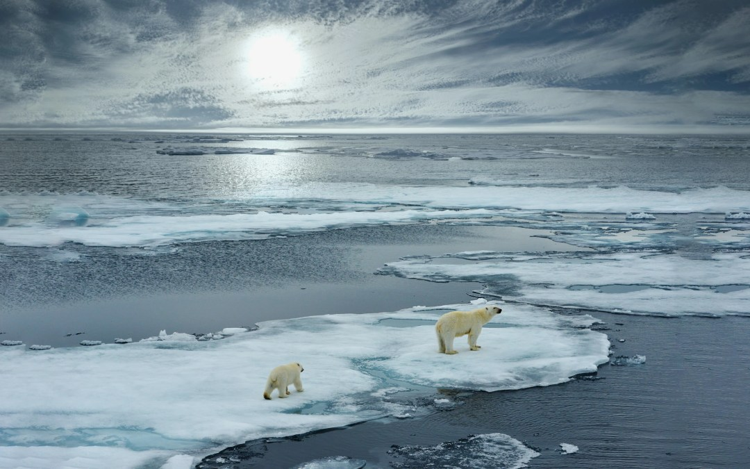 Draft: The Arctic – A Quick Look at Leading Organizations