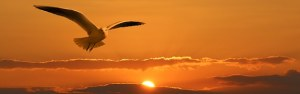A bird flying against a sunset sky as a banner