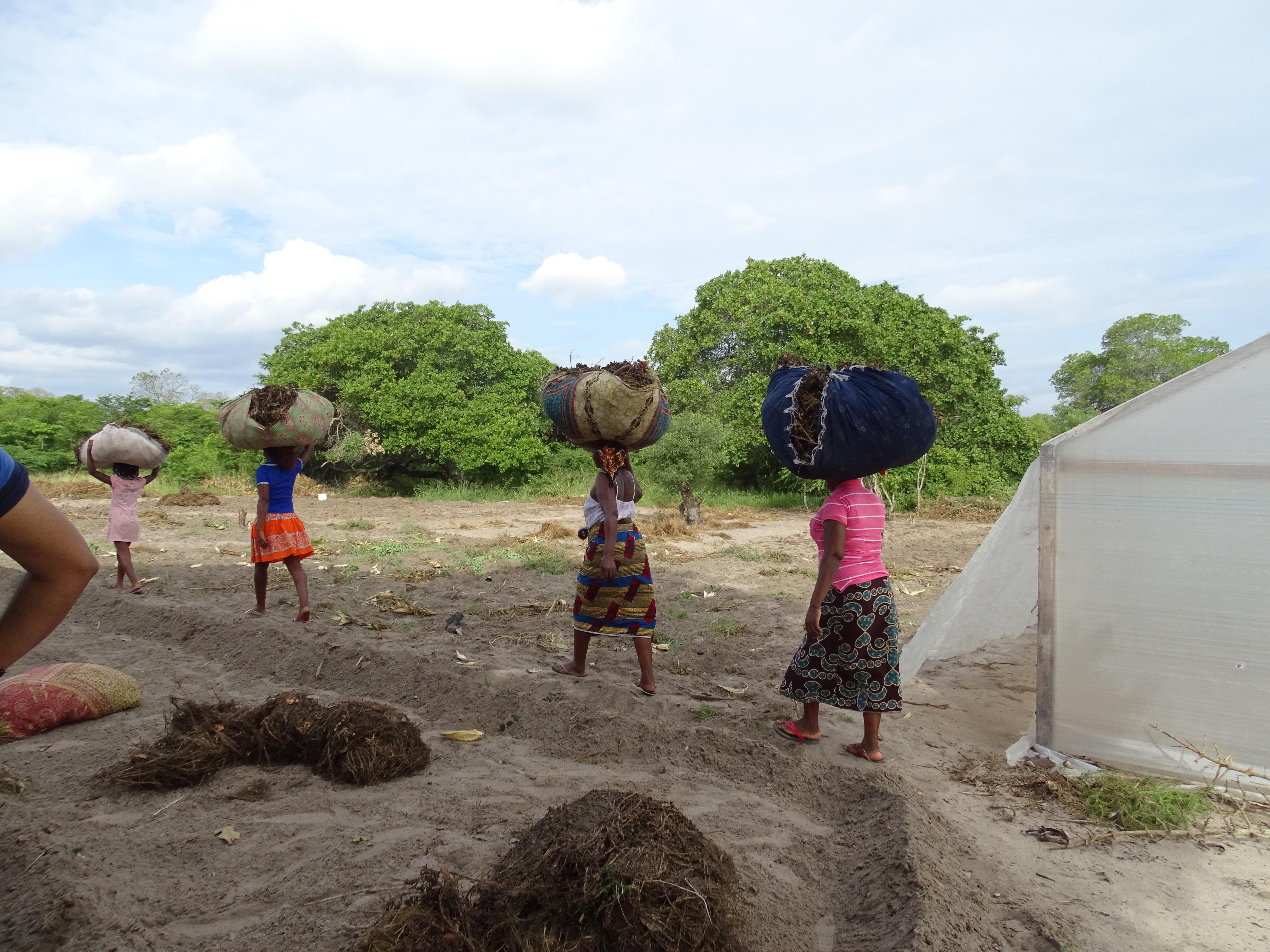 Affordable Greenhouses - World Hope International