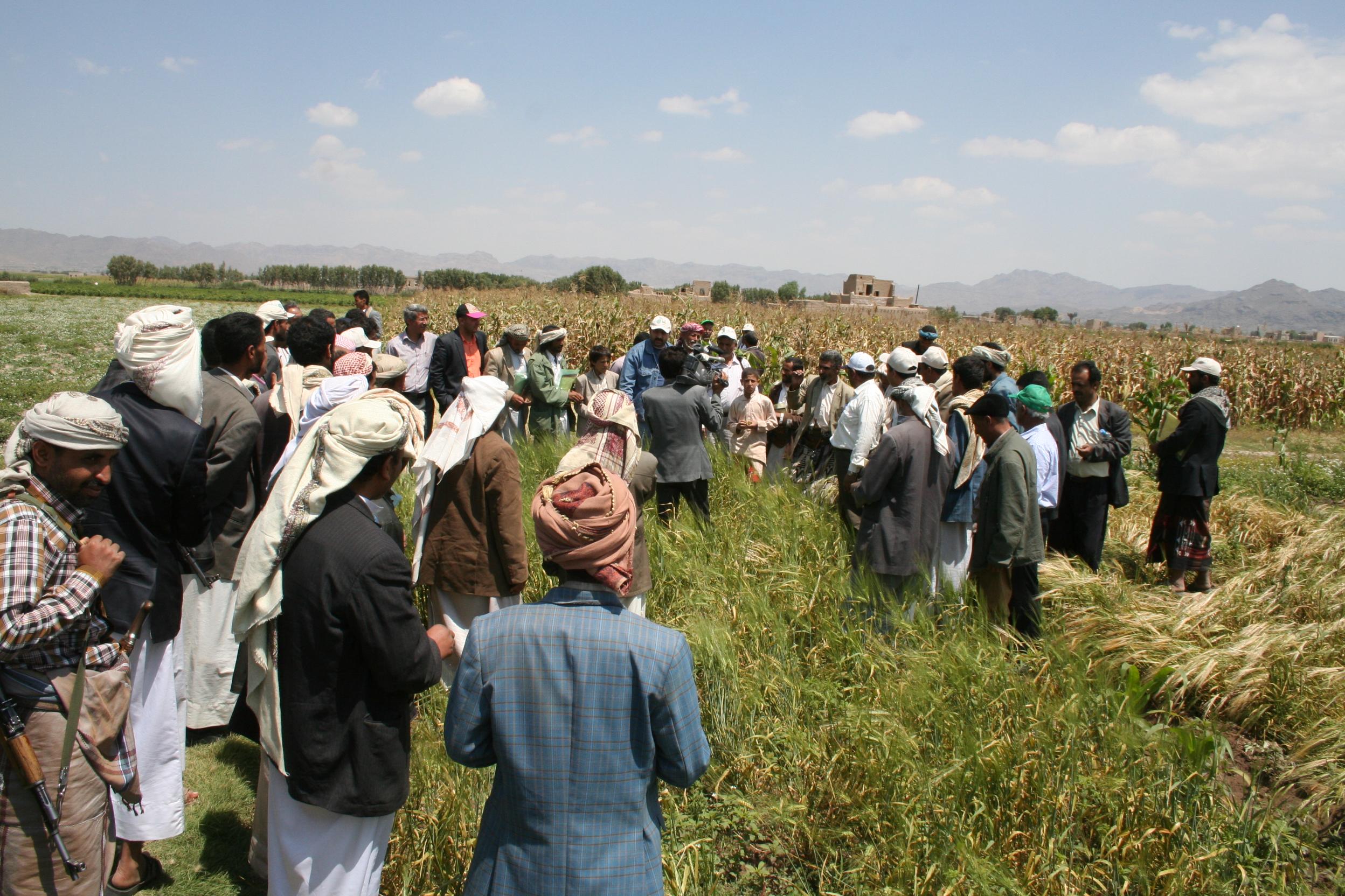 ICBA - Salt Tolerant Seed Production and Farmer Training