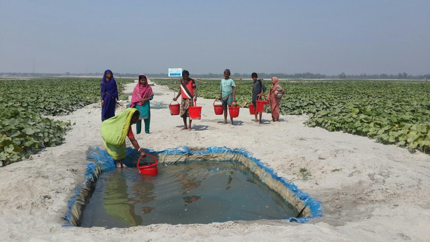 Sandbar Cropping - Practical Action Bangladesh