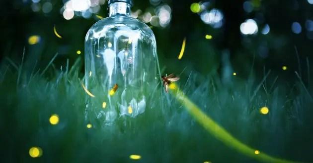 Beautiful Leaf Hd Wallpaper Is Watson Like A Firefly