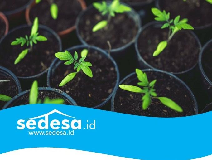 Setiap Keluarga Harus Memiliki Kebun Sayur Sendiri