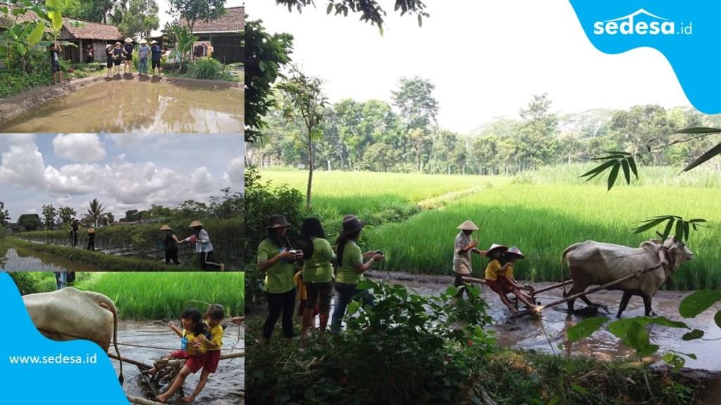 Belajar Pertanian Dalam Balutan Edukasi Wisata Tanjung