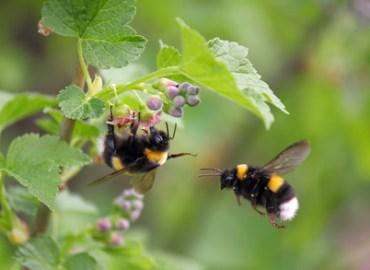 Bee-friendly Aromatic Plants: Photo Credit, fotolia