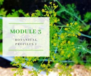 Certificate in Holistic Aromatherapy Module 3