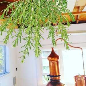 Secrets from the Aromatic Garden Retreat
