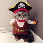 Amazon刈取りで海賊版を掴まされた話。偽物購入の回避方法とは?