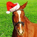 イベントで相場は動く!クリスマス・有馬記念の後のイベントは?