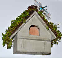 Sedum Green Roof Bird House!