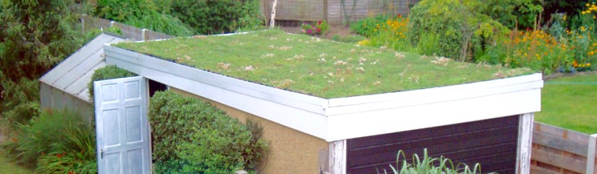 Buying a Sedum mat or Module, sedum tray, (S.Pod) for a Shed, Garage or Outbuilding.